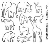 collection of  wild animals... | Shutterstock .eps vector #562810744