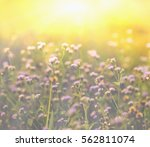 autumn grass and wildflower... | Shutterstock . vector #562811074