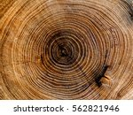 dark wood background showing... | Shutterstock . vector #562821946