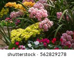 the very beautiful petals and...   Shutterstock . vector #562829278