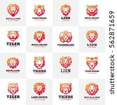tiger and lions face logo badge ... | Shutterstock .eps vector #562871659