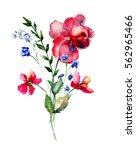 wild flowers  watercolor... | Shutterstock . vector #562965466