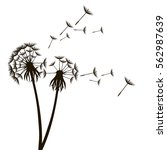 dandelion fluffy flower and... | Shutterstock .eps vector #562987639