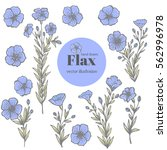 vector set with flax.flower... | Shutterstock .eps vector #562996978