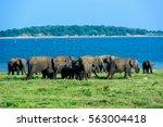 wild elephants in national park ... | Shutterstock . vector #563004418