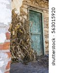 Small photo of Dried corn stalks straw in backyard of typical Albanian old house