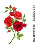 Stock vector vector branch of red roses isolated on a white background 563031184