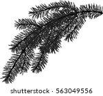 illustration with fir branch... | Shutterstock .eps vector #563049556