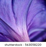 flowers in bloom bouquet... | Shutterstock . vector #563058220