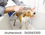 an image of bathing a cute dog | Shutterstock . vector #563065300