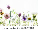 summer flowers | Shutterstock . vector #563067484