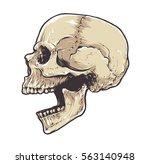 anatomic grunge skull vector... | Shutterstock .eps vector #563140948