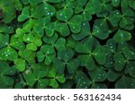 Water Of Shamrock
