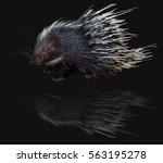 cute malayan porcupine ... | Shutterstock . vector #563195278