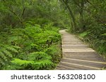 a path through lush temperate... | Shutterstock . vector #563208100