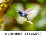 humming bird flies   Shutterstock . vector #563262934