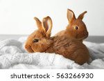 two cute fluffy bunnies on... | Shutterstock . vector #563266930
