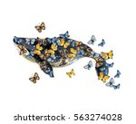 watercolor whale illustration... | Shutterstock . vector #563274028