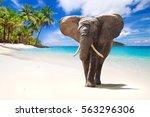 african elephant walking on... | Shutterstock . vector #563296306