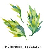 watercolor abstract branches... | Shutterstock . vector #563321539
