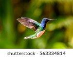 blue headed humming bird | Shutterstock . vector #563334814