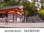deer and stair in itsukushima... | Shutterstock . vector #563385430