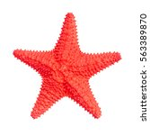 caribbean starfish. isolated on ... | Shutterstock . vector #563389870