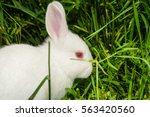Stock photo white rabbit 563420560