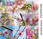 Spring Garden Collage...