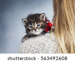Stock photo beautiful siberian kitten with red bow sits on the blond girl s shoulder 563492608