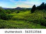 cameron highlands | Shutterstock . vector #563513566