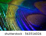 feather peacock texture | Shutterstock . vector #563516026
