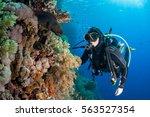 Moray Eel With Scuba Diver