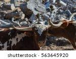 affection.  buddies.  a couple... | Shutterstock . vector #563645920