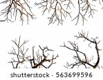 isolated tree brach on white... | Shutterstock . vector #563699596