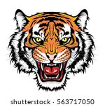 tiger head | Shutterstock .eps vector #563717050