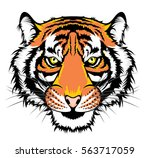 tiger head | Shutterstock .eps vector #563717059