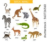 tropical animals set isolated...   Shutterstock .eps vector #563726560