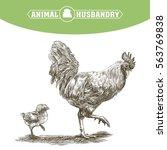 chicken breeding. animal... | Shutterstock .eps vector #563769838