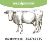 sketch of cow drawn by hand.... | Shutterstock .eps vector #563769850