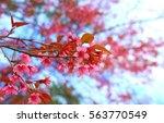 giant tiger flower   Shutterstock . vector #563770549