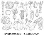 Vegetables Vector Sketch...
