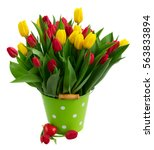 Fresh Yellow And Red Tulips...