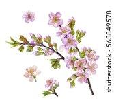watercolor hand painted cherry... | Shutterstock . vector #563849578