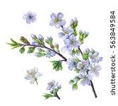 watercolor hand painted cherry...   Shutterstock . vector #563849584
