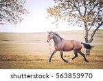 Beautiful Brown Horse Gallopin...
