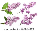 Light Lilac Flowers Isolated O...