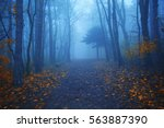 magical foggy seasonal forest... | Shutterstock . vector #563887390