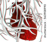 human heart and veins. 3d... | Shutterstock . vector #563908990