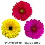 set gerbera flowers  isolated... | Shutterstock . vector #563931859